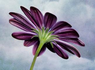 Sıradan Bir Günde Çiçek Hediye Edin