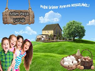 İstanbul toptan köy yumurtası